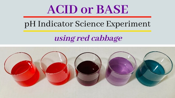 Red Cabbage Science experiment – pH indicator
